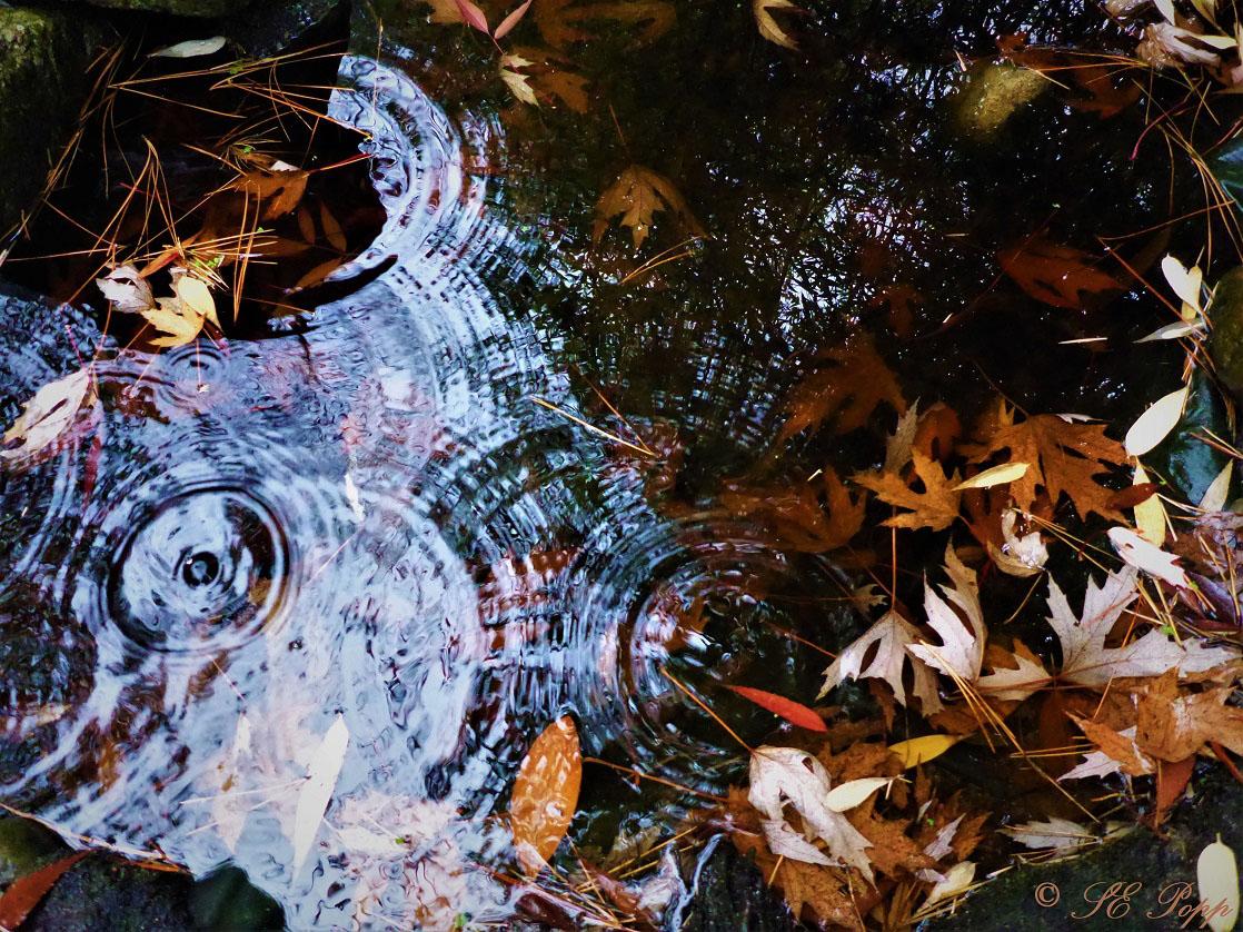 fallen leaves in a pond