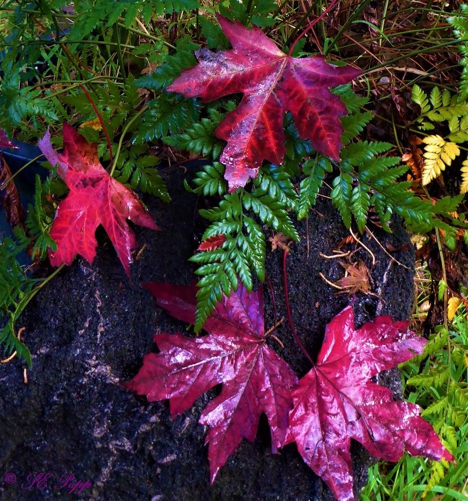 fall colors, fallen leaves
