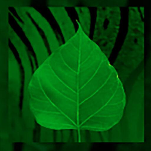 Green Tiger Garden logo